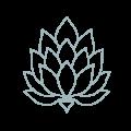 lotus-color-01